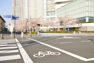 自転車通行帯とみなとみらいの桜並木の写真素材 [FYI01442256]