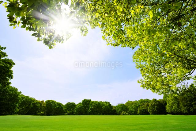 草原と新緑の樹木の写真素材 [FYI01442272]