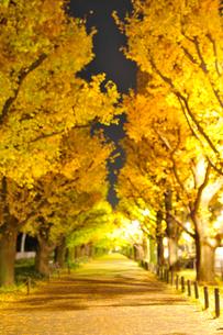 神宮外苑のイチョウ並木の歩道と黄葉の夜景の写真素材 [FYI01442287]
