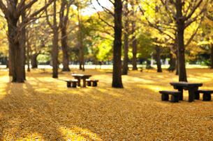 黄色い絨毯の写真素材 [FYI01442335]