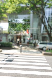 新緑の表参道と横断歩道の写真素材 [FYI01442385]