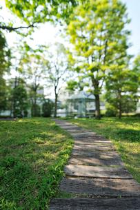 芝浦運河沿いの小道と緑地の写真素材 [FYI01442502]