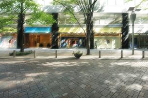 石畳の歩道と陽光の丸の内仲通りの写真素材 [FYI01442561]
