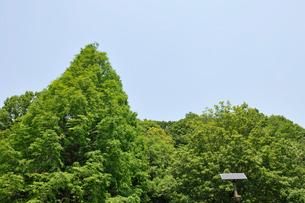 新緑の木々とソーラーバネルの写真素材 [FYI01442587]