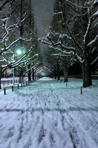 深夜の雪の神宮外苑の写真素材 [FYI01442622]