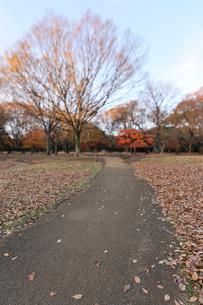 公園の散歩道と落ち葉の写真素材 [FYI01442690]
