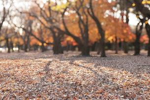 秋の公園の写真素材 [FYI01442719]