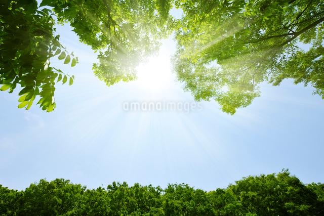 新緑と陽光の写真素材 [FYI01442743]