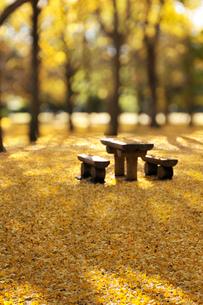 黄色い絨毯の写真素材 [FYI01442757]