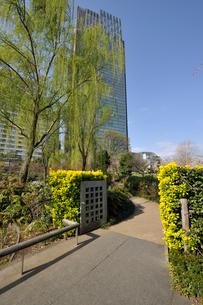 散歩道と東京ミッドタウンタワーの写真素材 [FYI01442818]
