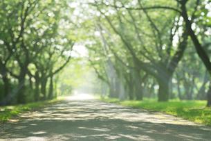 新緑の散歩道の写真素材 [FYI01442865]