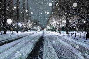大雪の深夜の神宮外苑イチョウ並木の写真素材 [FYI01442875]
