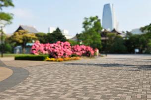 バラの咲く芝公園の石畳の広場の写真素材 [FYI01442944]