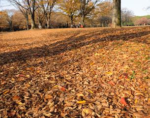 晩秋の代々木公園の写真素材 [FYI01442985]