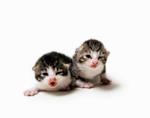 2匹の赤ちゃん猫の写真素材 [FYI01442994]