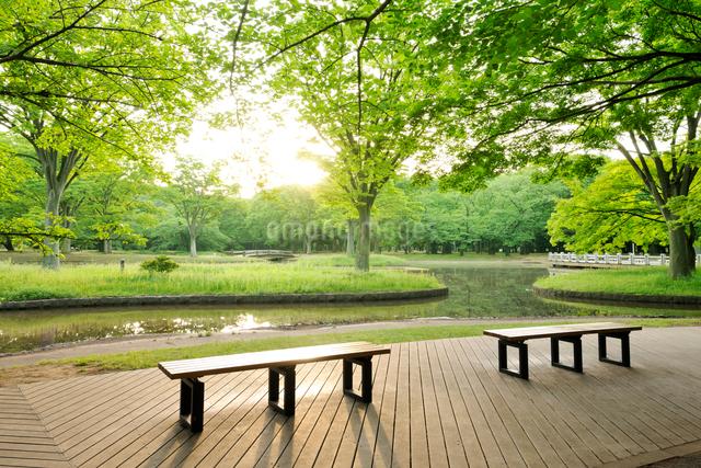 新緑の代々木公園の朝の写真素材 [FYI01443021]