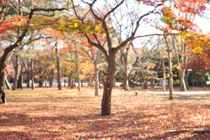 紅葉の代々木公園の写真素材 [FYI01443082]