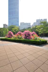 バラの咲く芝公園の石畳の広場の写真素材 [FYI01443151]