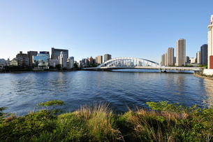 隅田川と永代橋の写真素材 [FYI01443167]
