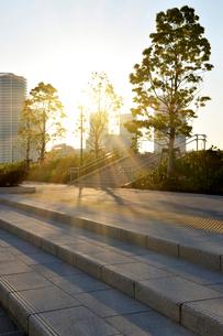 朝日に輝く晴海臨海公園の石畳の写真素材 [FYI01443169]