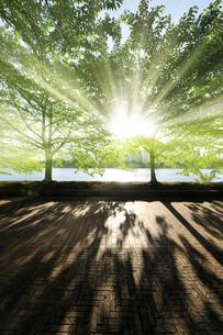 新緑の早朝の散歩道の写真素材 [FYI01443174]