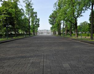 新緑のユリノキの並木道の写真素材 [FYI01443183]
