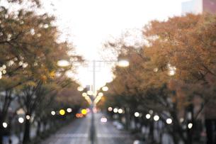 表参道の紅葉の写真素材 [FYI01443199]