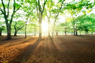 代々木公園の新緑の樹木の写真素材 [FYI01443231]