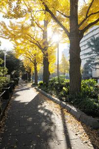 山下公園通りの黄葉のイチョウ並木の写真素材 [FYI01443327]
