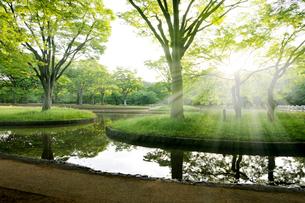 朝日と新緑の代々木公園の写真素材 [FYI01443330]
