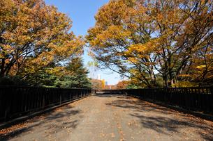 秋の代々木公園の歩道橋の写真素材 [FYI01443343]