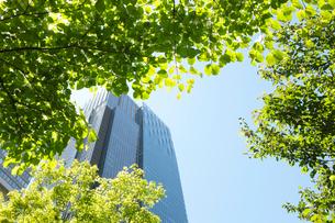 新緑とミツドタウンタワーの写真素材 [FYI01443369]