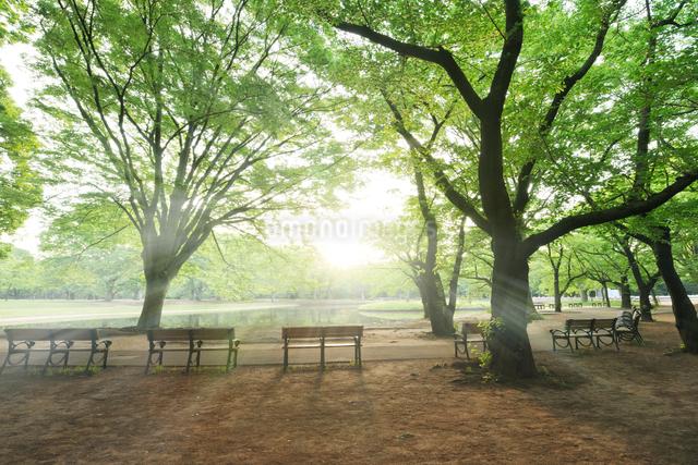 朝靄の新緑の代々木公園の写真素材 [FYI01443379]