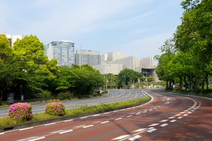 新緑の内堀通りと高層ビルの写真素材 [FYI01443481]