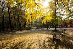 秋色の代々木公園の写真素材 [FYI01443510]