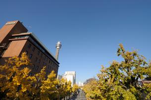 山下公園通りと黄葉のイチョウ並木の写真素材 [FYI01443521]