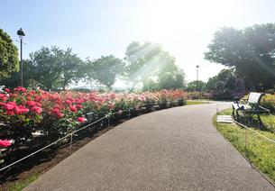 港の見える丘公園のローズガーデンの写真素材 [FYI01443543]
