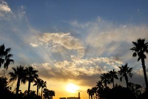 夕日とパームツリーの写真素材 [FYI01443557]