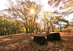 紅葉の代々木公園の写真素材 [FYI01443620]