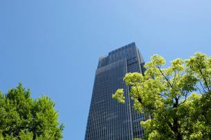 新緑とミツドタウンタワーの写真素材 [FYI01443625]