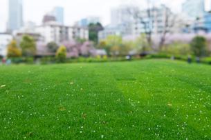 東京ミッドタウンガーデンの広場の芝生の写真素材 [FYI01443637]