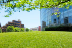 新緑の芝生と都心のビルの写真素材 [FYI01443669]