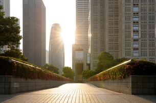 朝日に輝く新宿副都心の高層ビル街の写真素材 [FYI01443672]