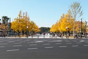 日比谷通りと紅葉の行幸通りの写真素材 [FYI01443714]