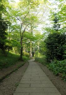 新緑の有栖川宮記念公園の石畳の通路の写真素材 [FYI01443772]