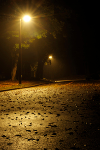 深夜の代々木公園の写真素材 [FYI01443799]