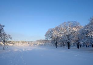 積雪の代々木公園の朝の写真素材 [FYI01443847]