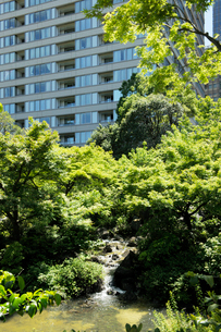 新緑の樹木と高層ビルの窓の写真素材 [FYI01443876]