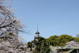 九段坂公園の常灯明台と満開の桜の写真素材 [FYI01443900]