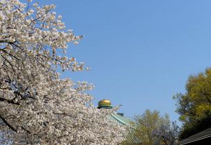 満開の桜と日本武道館の金色の擬宝珠の写真素材 [FYI01443903]